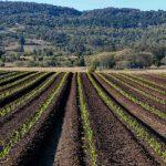 Estados Unidos crea programa de transición para productos orgánicos