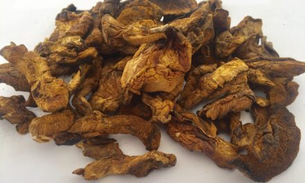 Dried Mushrooms Suillus Luteus
